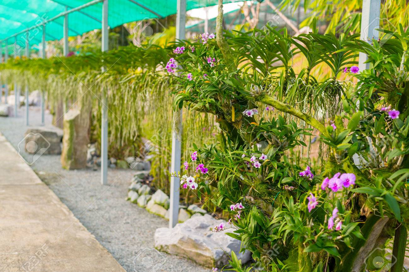 Public Plant Nursery And Garden Center For Tropical Flower And Orchids.  Selective Focus. Stock