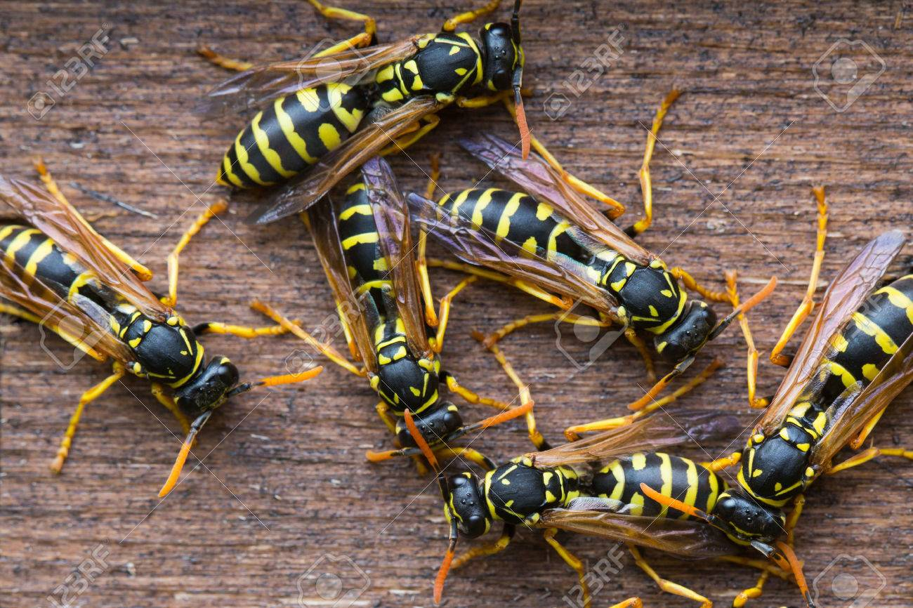 Several wasps gathering near their nest Stock Photo - 45157337