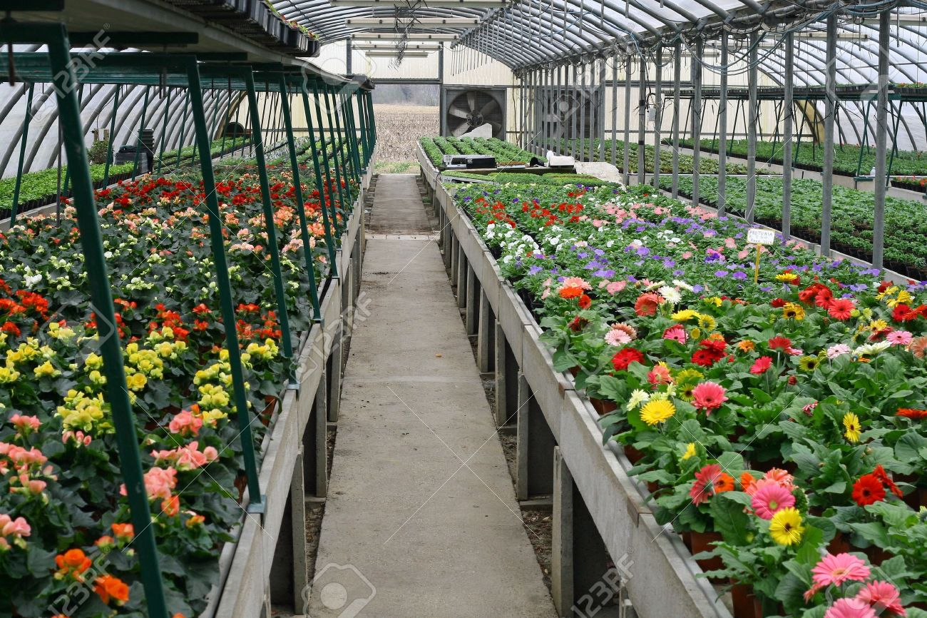 Interior Of A Protected Greenhouse For Growing Flowers And Plants