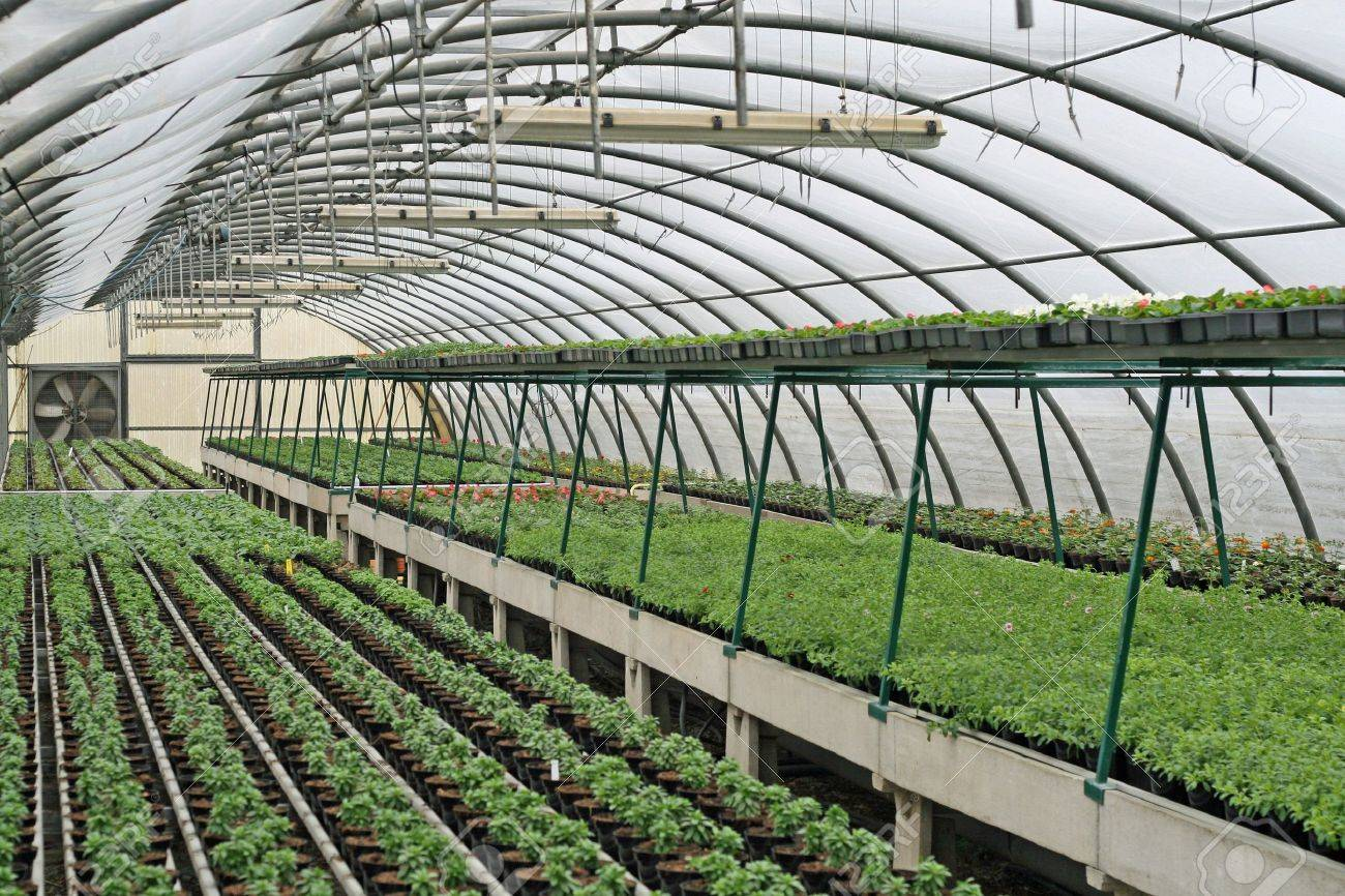 interior of a greenhouse for growing flowers and plants Stock Photo - 12869627