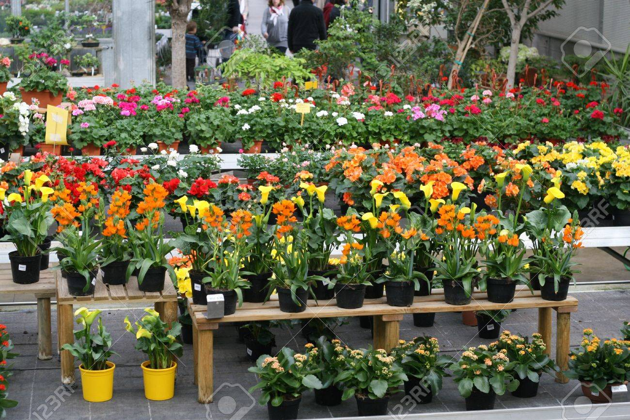 display of flowering plants for sale inside a greenhouse in winter