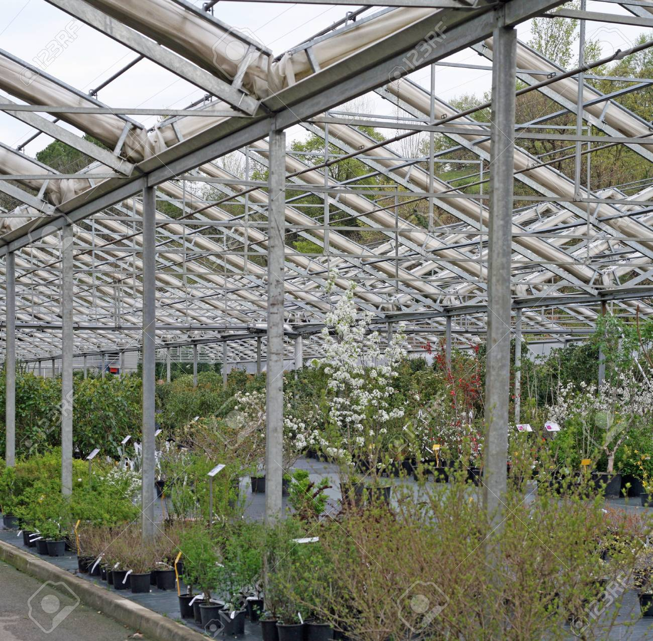 interior of a greenhouse for growing plants in the heat in winter Stock Photo - 13047353