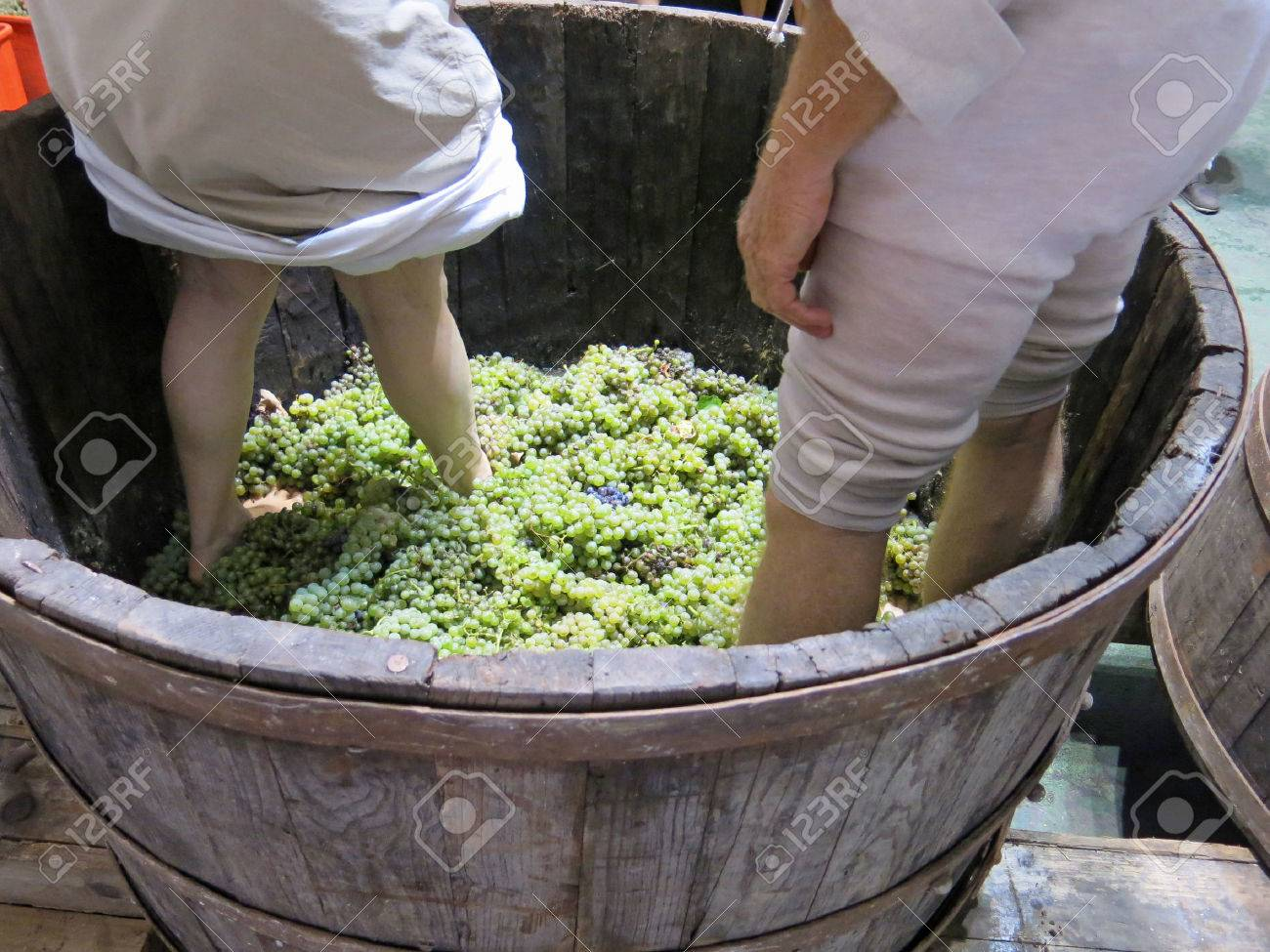 men and women inside the tank to press the white grapes to make wine Stock Photo - 23785305
