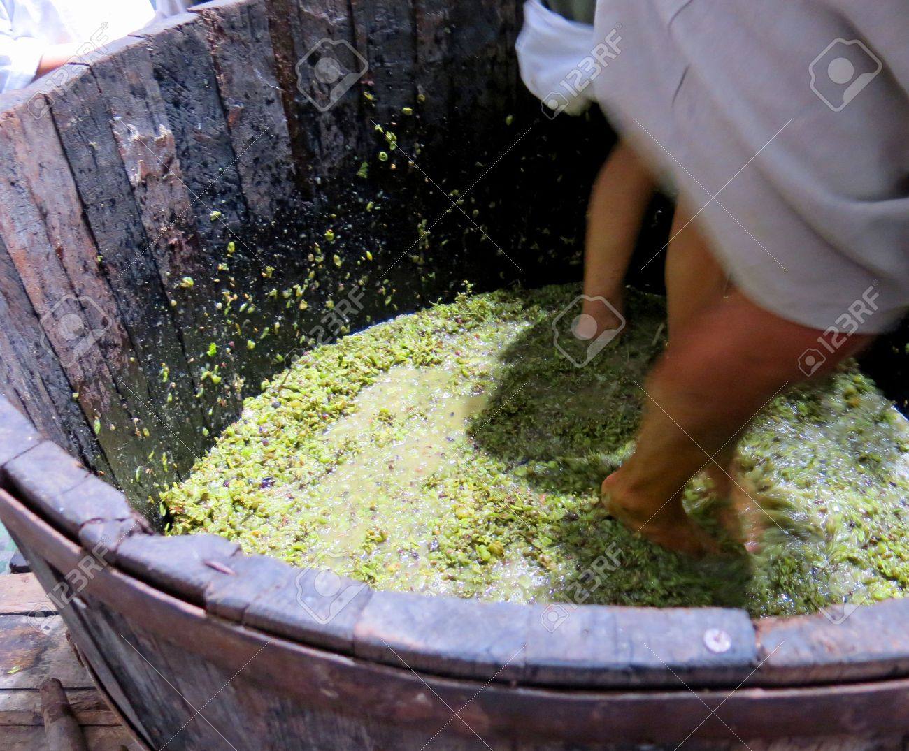 men and women inside the tank to press the white grapes to make good wine Stock Photo - 23785352