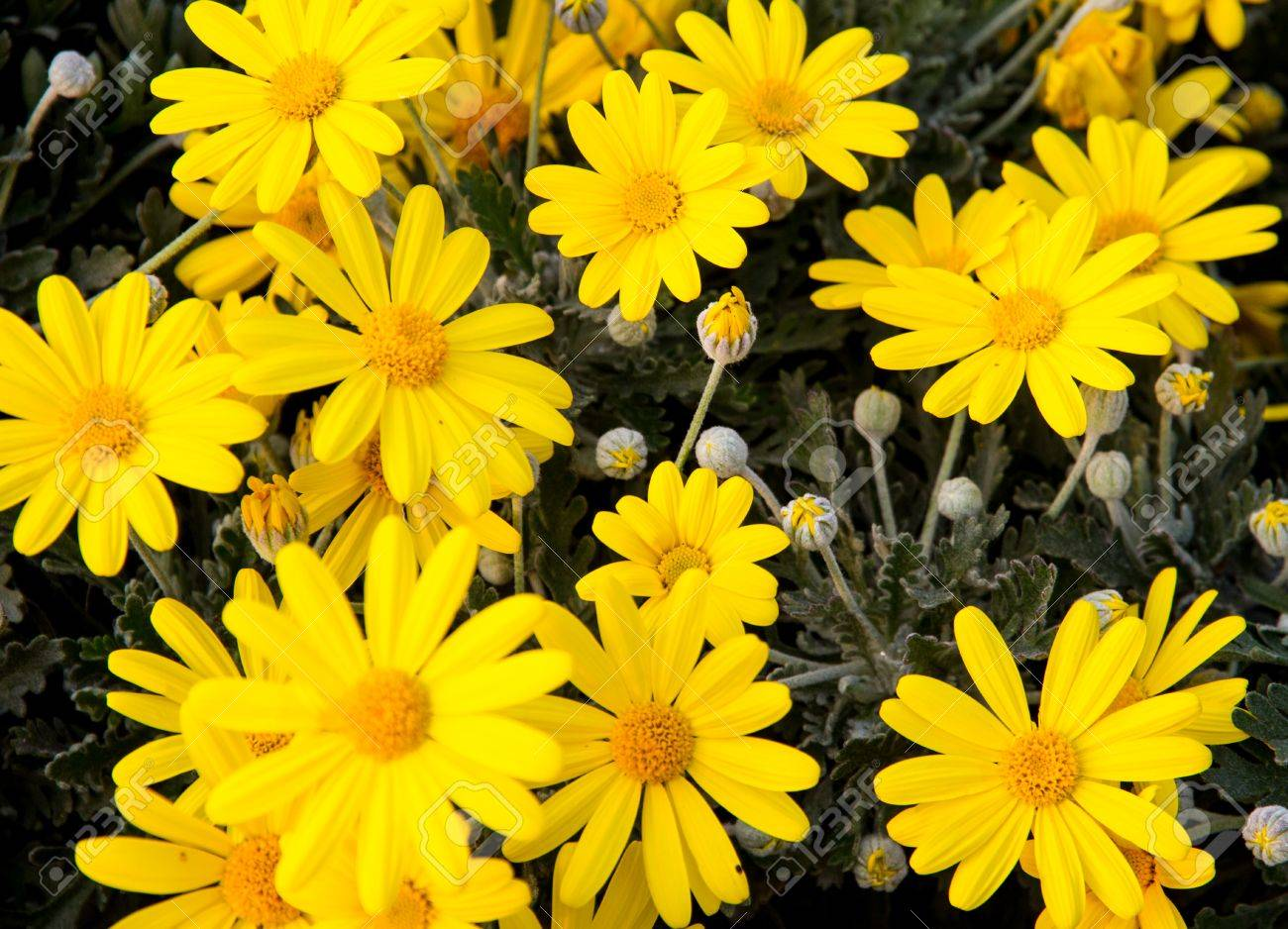 Yellow flowers and daisies from the florist for sale stock photo stock photo yellow flowers and daisies from the florist for sale izmirmasajfo Images