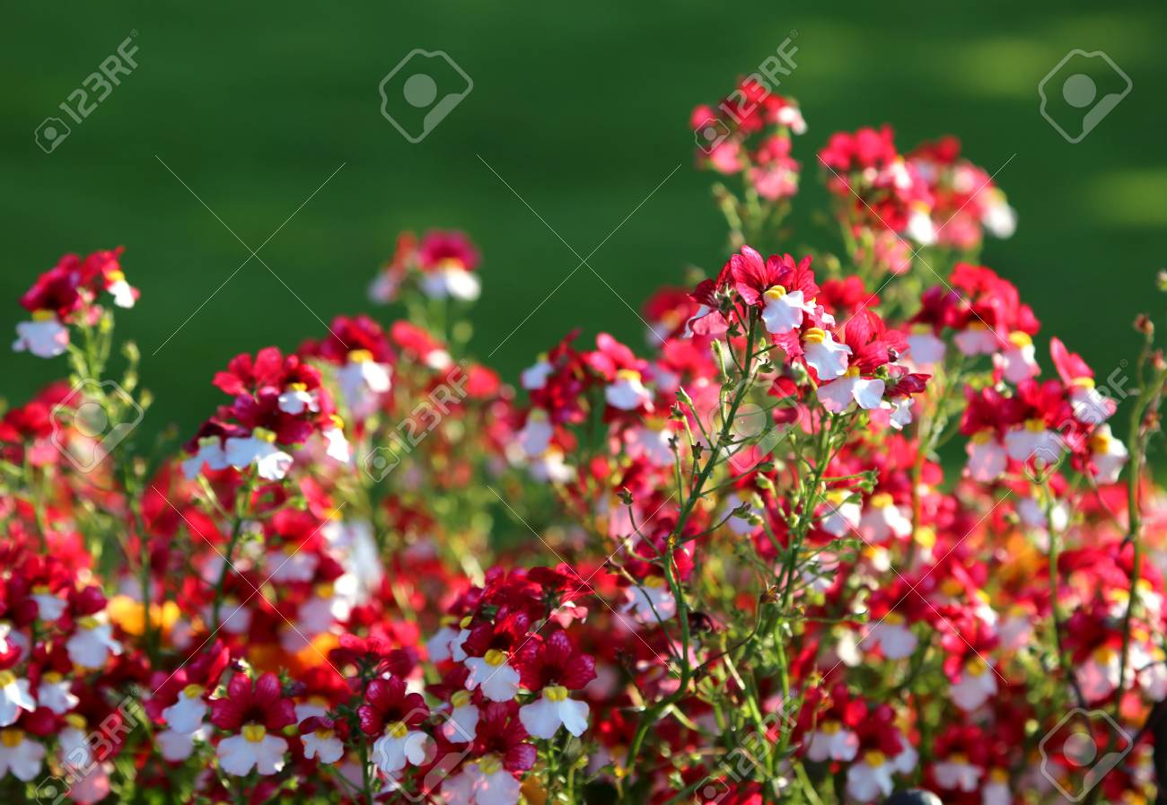 Beautiful Rare Small Flowers With White And Red Two-color Petals ...