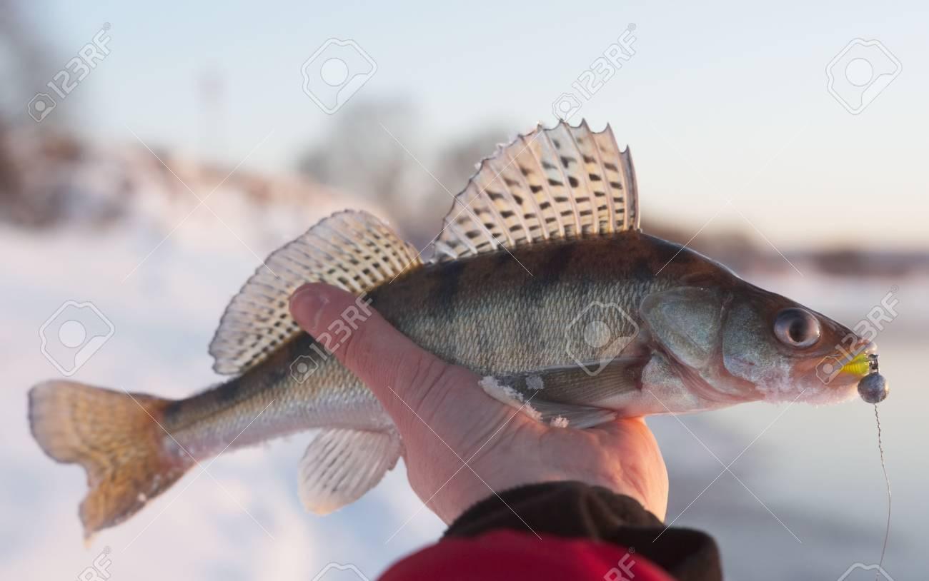 Evening catch Stock Photo - 6396545