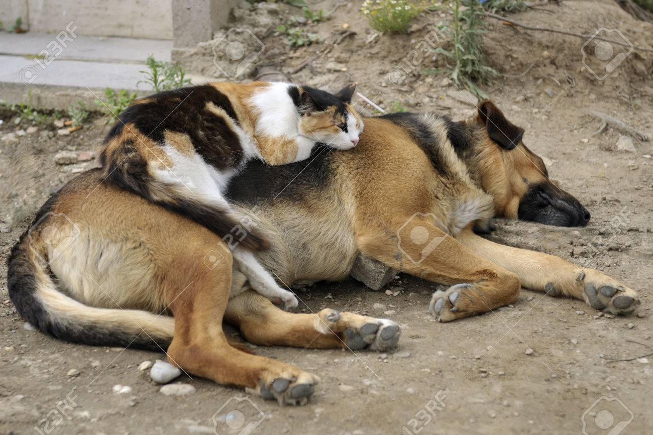 Cat sleeps on a dog outdoors Standard-Bild - 29844541