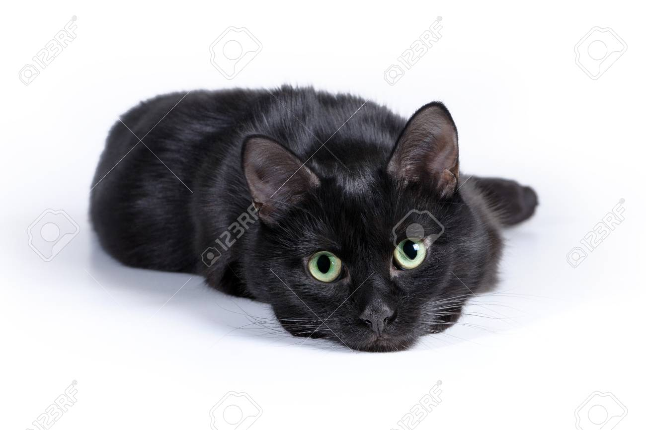 Black cat lying on a white background, looking at camera. Standard-Bild - 37035777