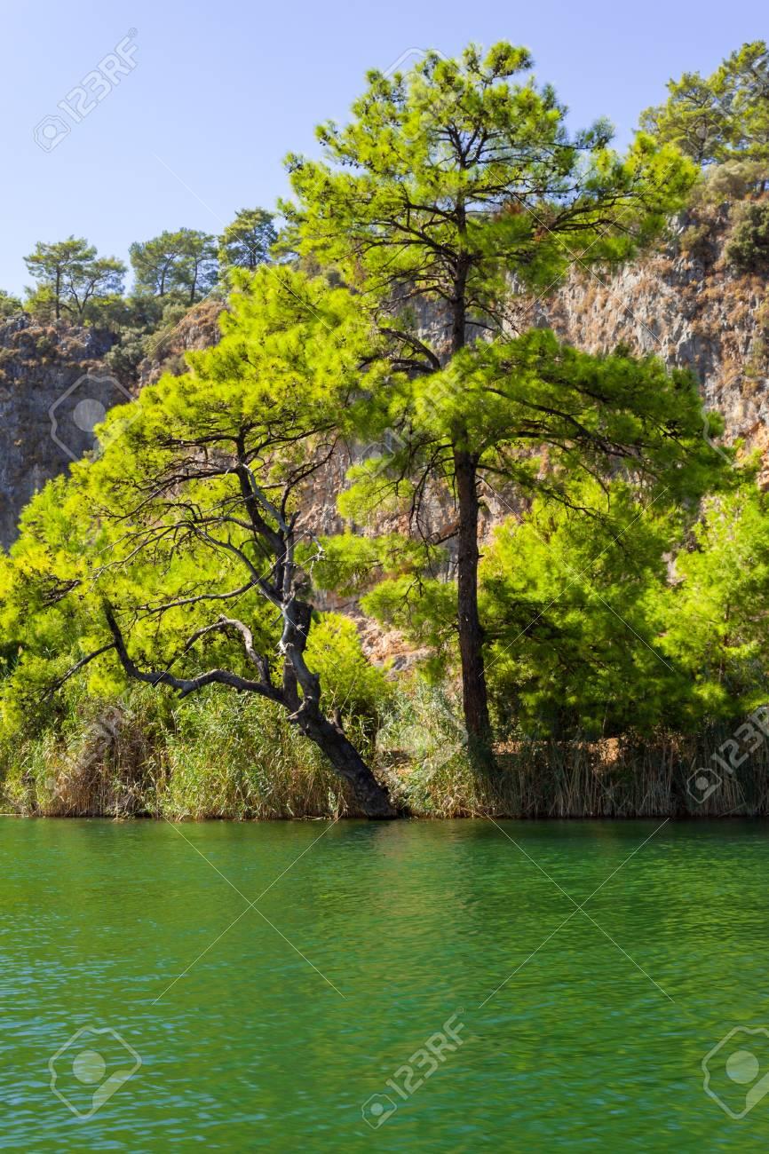 pine at green lake Stock Photo - 19438485