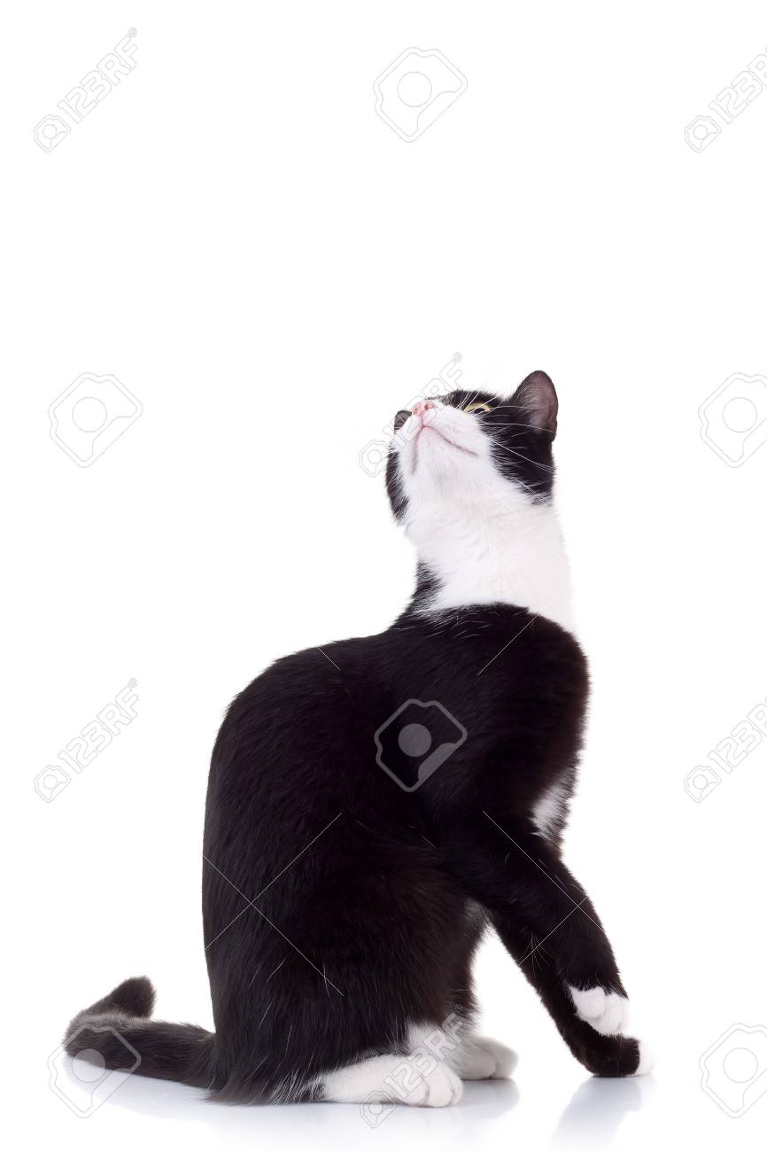 cute black and white cat  looking up for something Stock Photo - 8043212