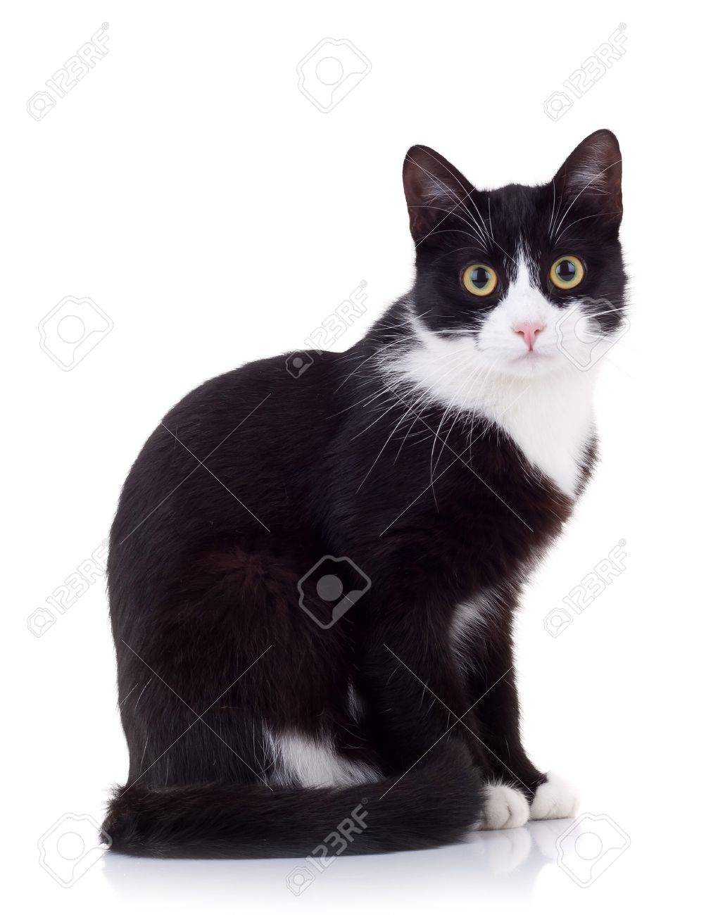 seated cute black and white cat  looking at the camera Stock Photo - 8043207
