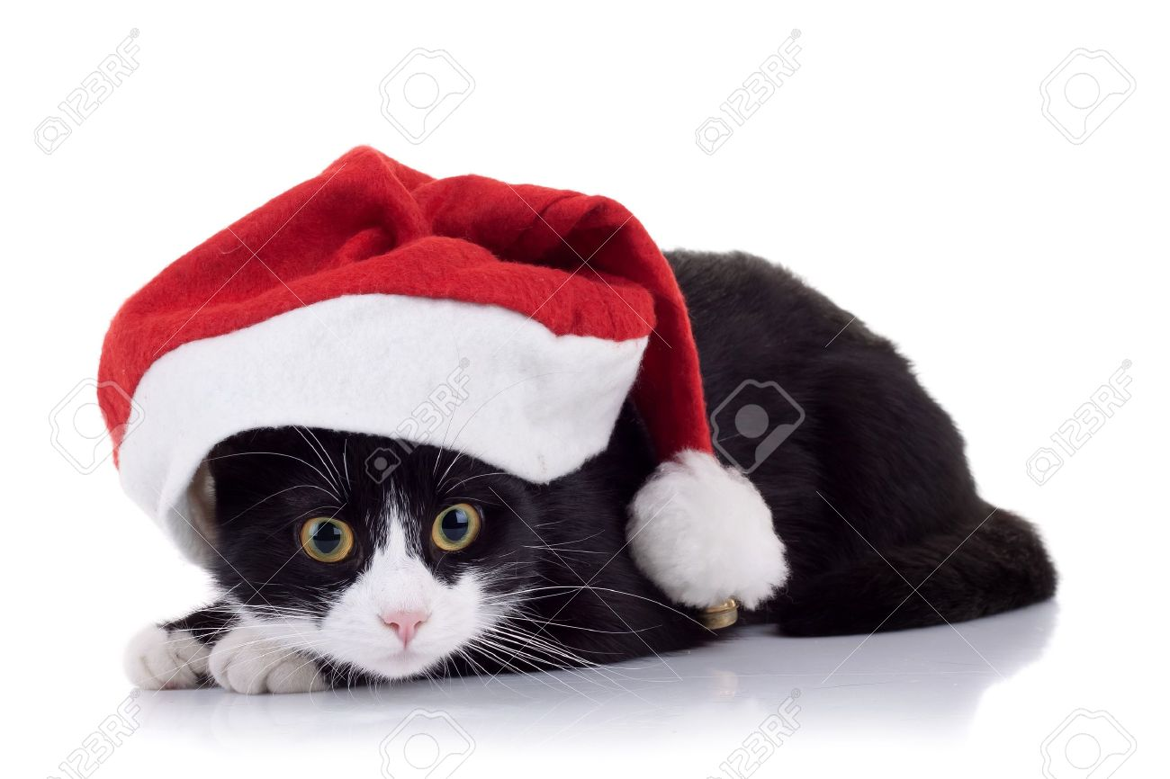 closeup picture of a cute black and white cat wearing a christmas