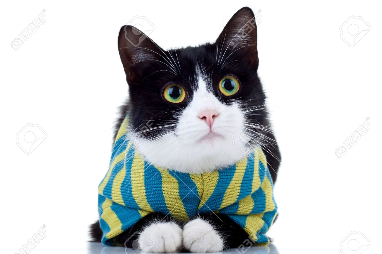 Cute Black And White Cat Wearing Clothes Over White Stock Photo
