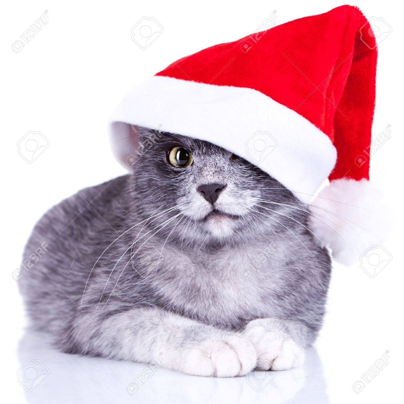 adorable little kitty with a santa cap on lying on a white