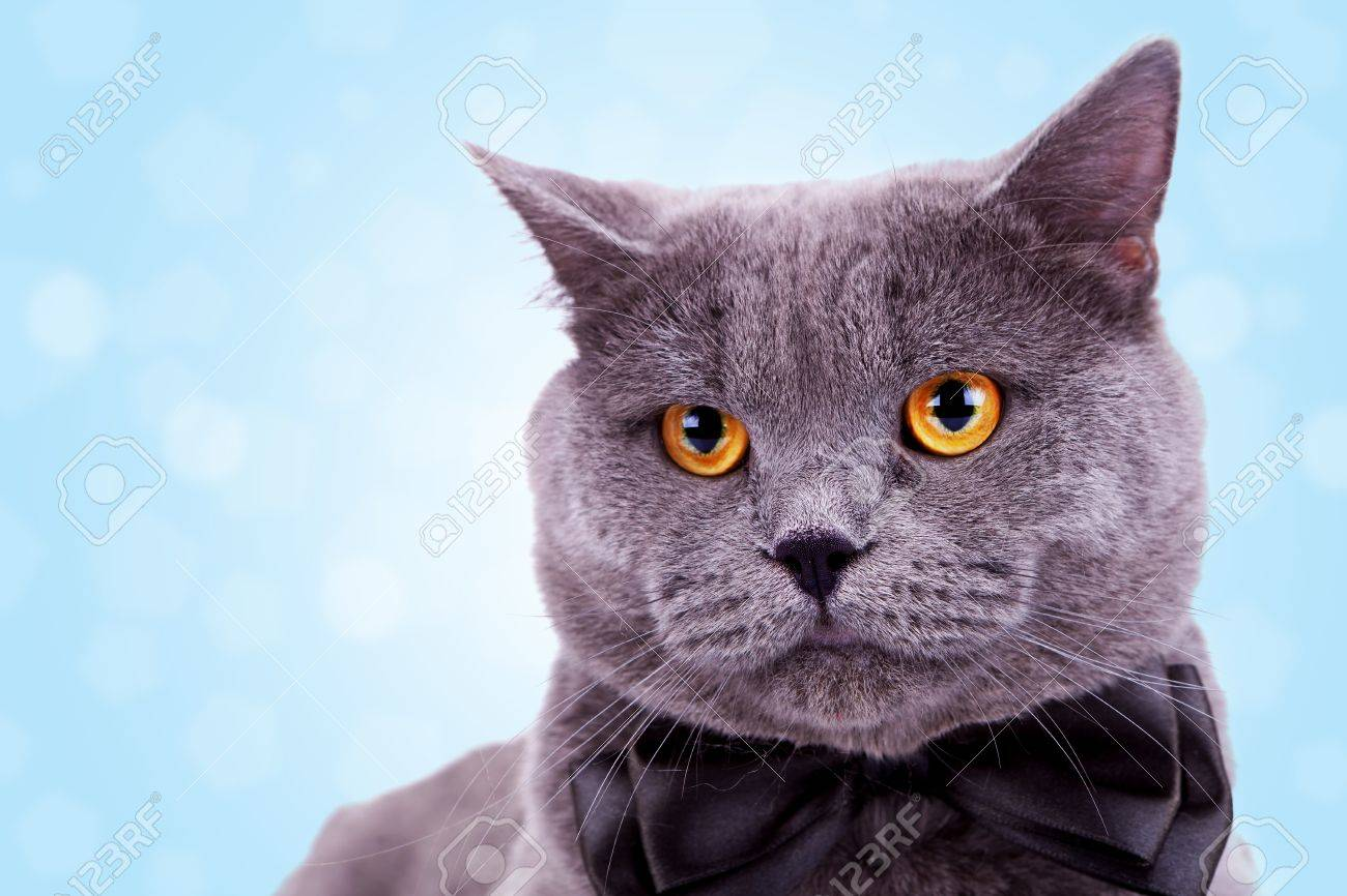 cat head stock photos u0026 pictures royalty free cat head images and