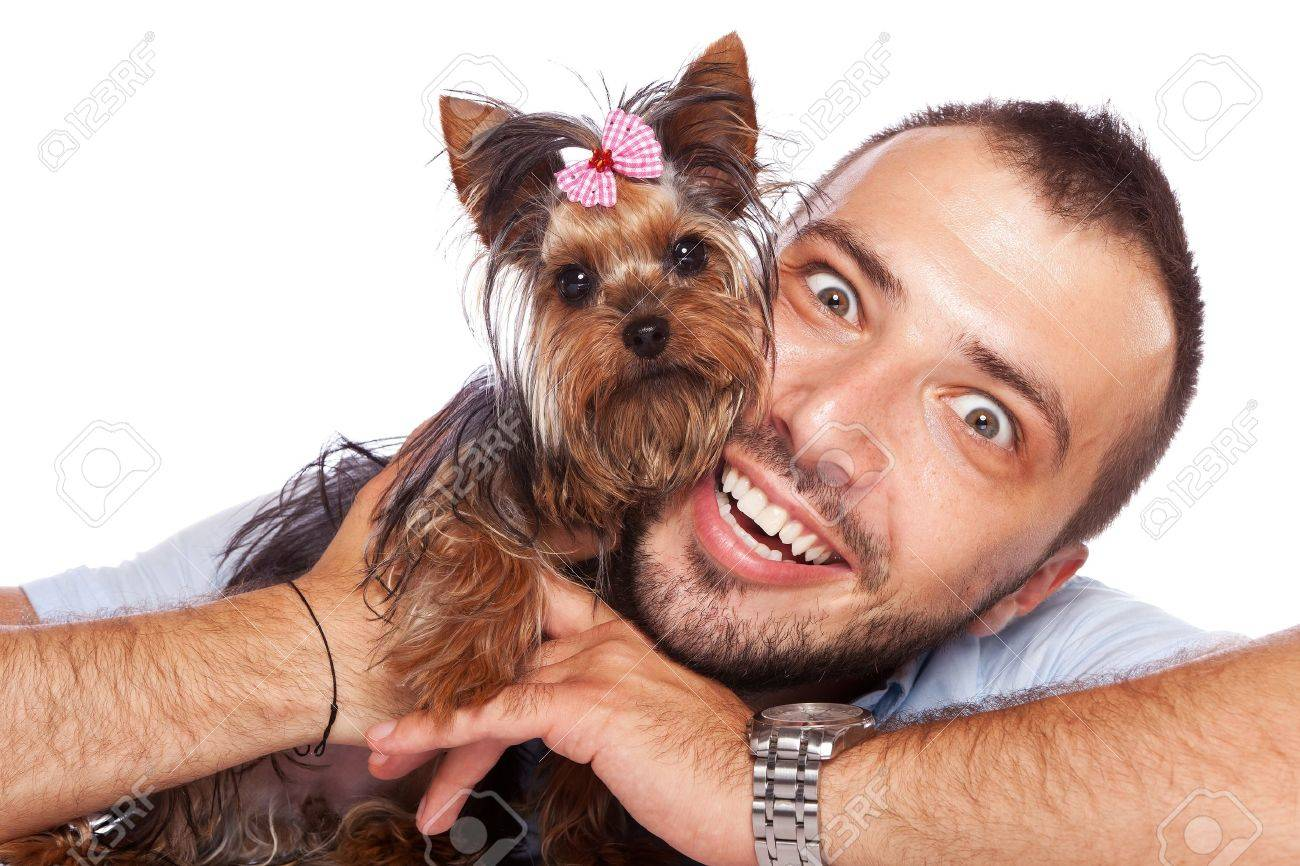 cute yorkshire terrier puppy dog in the arms of a young man looking at the camera Stock Photo - 14680315