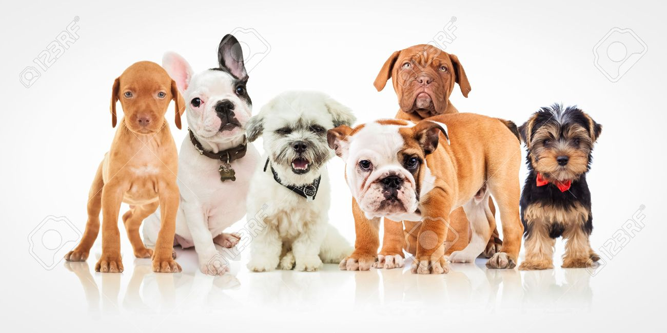 Six Cute Puppy Dogs Of Different Breeds Standing Together On Stock Photo Picture And Royalty Free Image Image 56347888