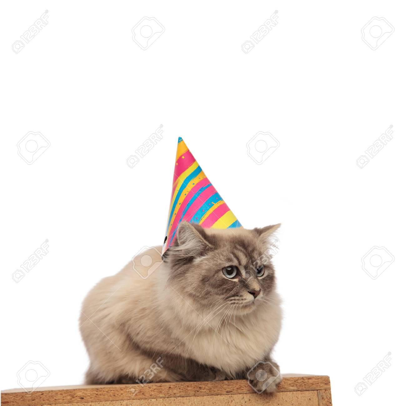 Adorable Birthday Cat With Blue Eyes And Cap Lies On A Wooden Box Looks
