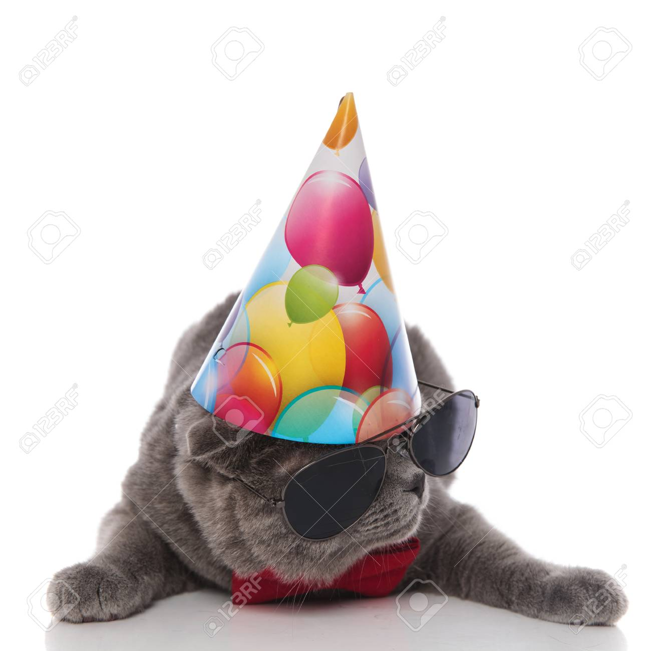 Cool Grey Gentleman Cat With Birthday Hat Looks Down To Side While Lying On White Background