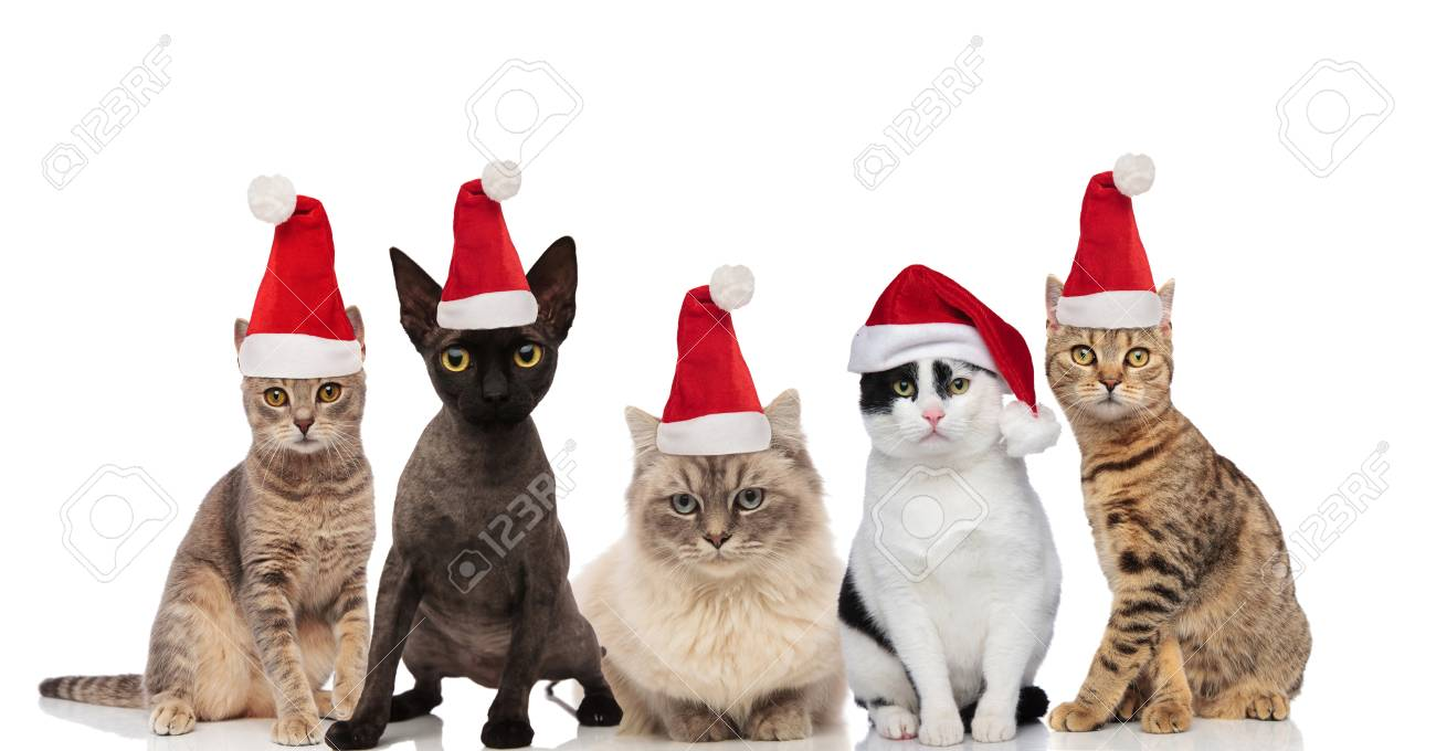 Team Of Five Cute Cats Wearing Santa Hats Sitting And Standing