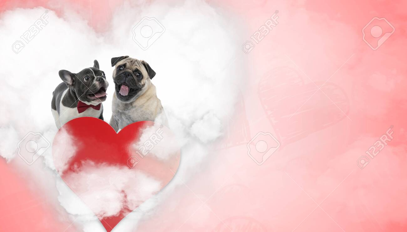 In Love French Bulldog And Pug Puppies Wearing Bowtie Panting Stock Photo Picture And Royalty Free Image Image 140314673