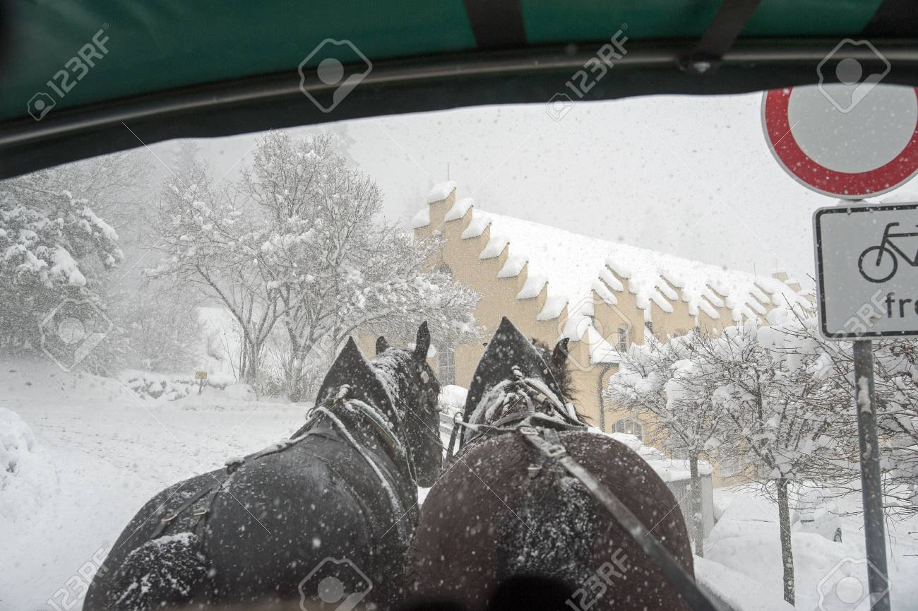 A horse-drawn carriage trotting during a snowfall Stock Photo - 17177225