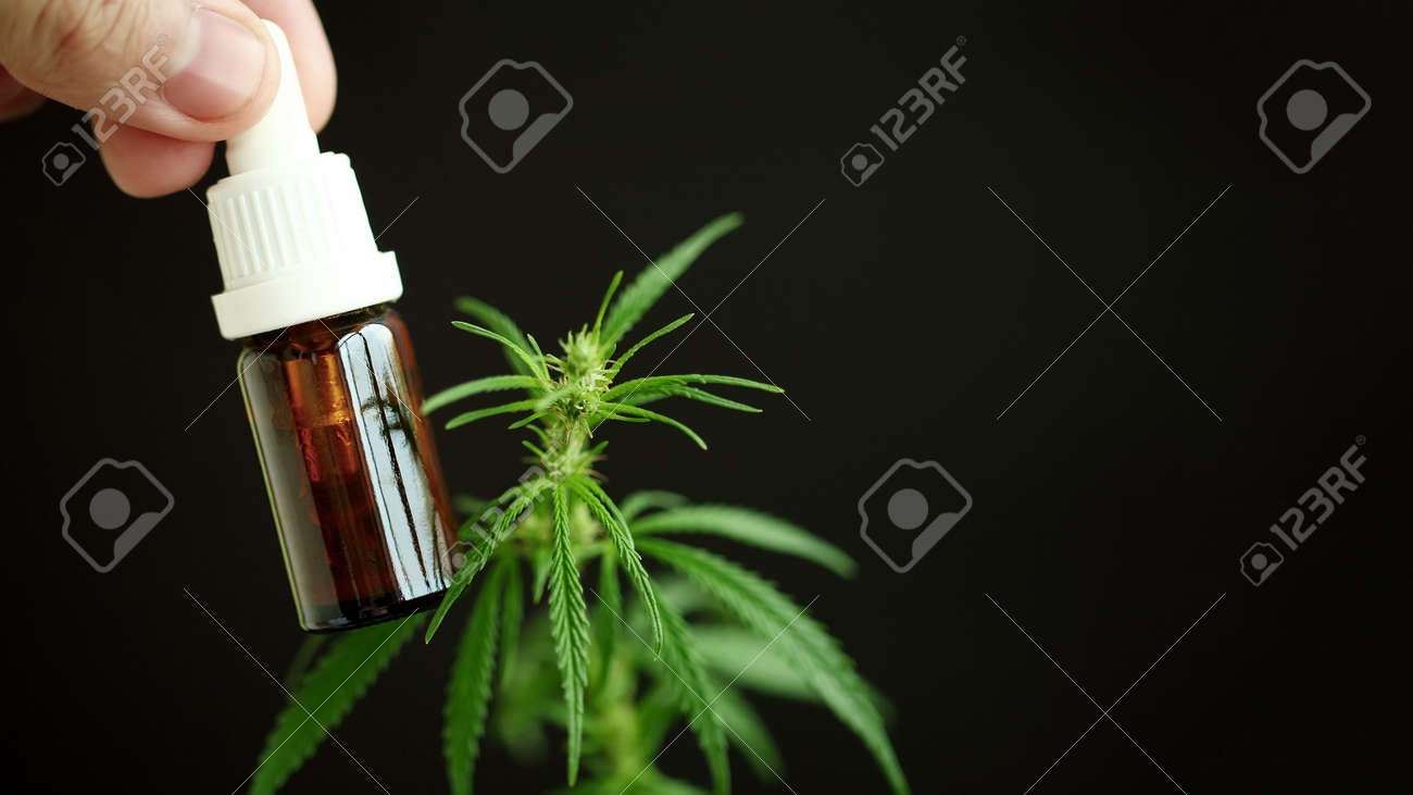 Hemp oil bottle in doctor's hands with CBD cannabidiol next to cannabis leaf and a drop of CBD oil on it. Medical marijuana products including hemp leaf, cannabidiol, and hash oil - 167485073