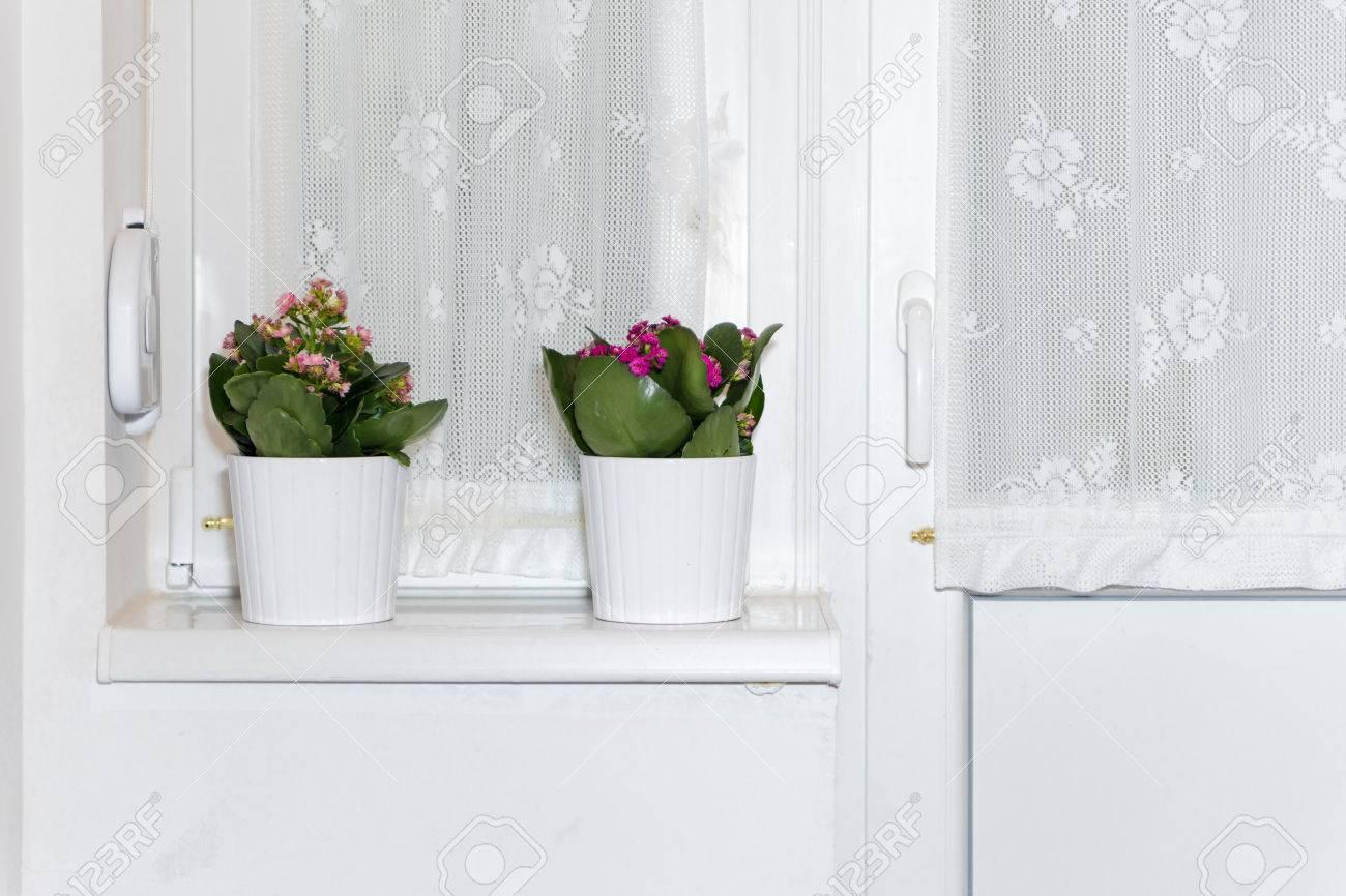 Zwei Töpfe Auf Dem Fensterbrett. Weiße Schale Mit Blumen Pflanze ...