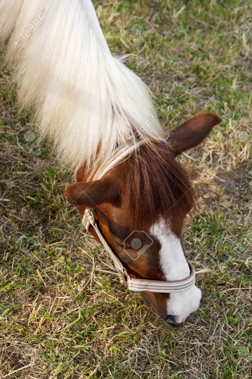 Close up image of a horse head grazing Stock Photo - 7159992