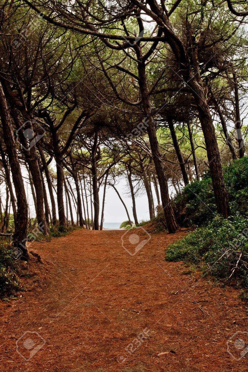Forest path above Tuscany cost. Stock Photo - 7824177