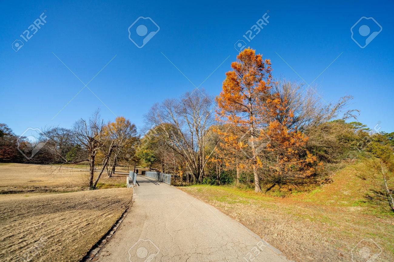 Winter foliage in Piedmont Park Atlanta GA USA - 161260342