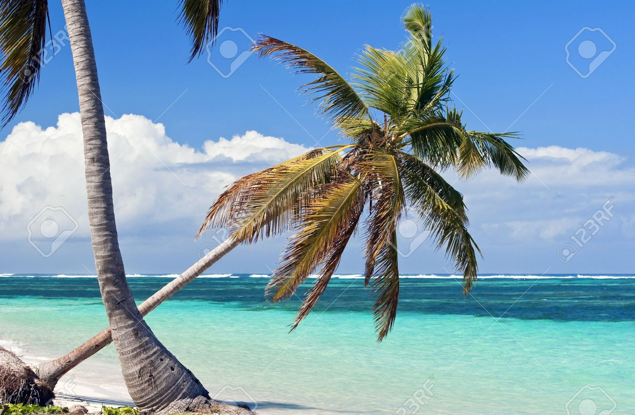 Fresh High Resolution Image Of Palm Trees On A Caribbean Beach