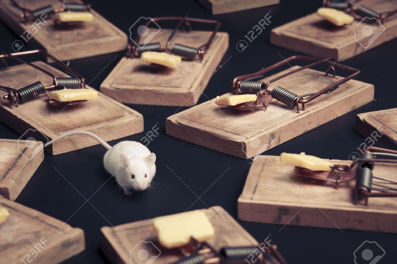 マウス トラップに囲まれて危険のマウス の写真素材・画像素材 Image ...