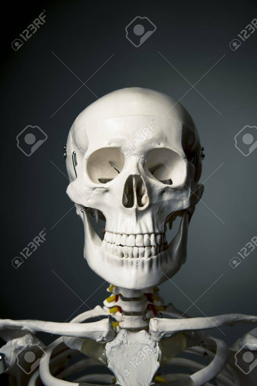 medical skeleton model with dramatic light Stock Photo - 15385057