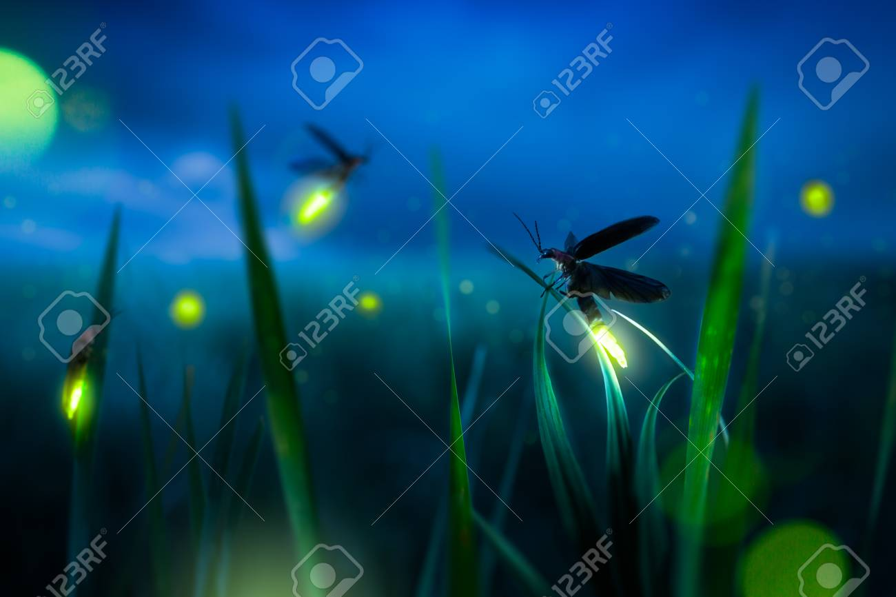glowing firefly on a grass filed at night - 114254469