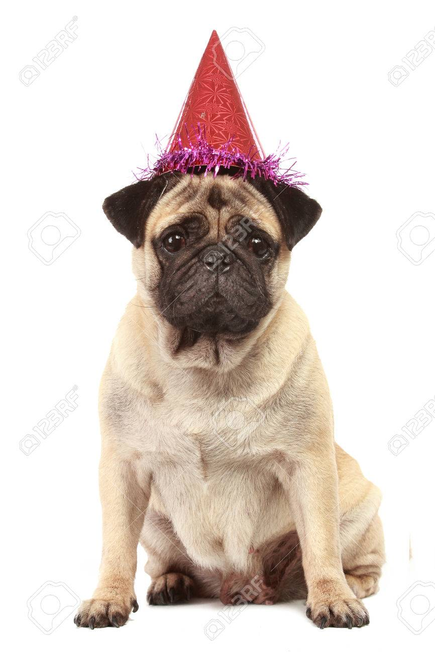 Niedlichen Mops Hund Mit Geburtstag Hut Auf Weissem Hintergrund