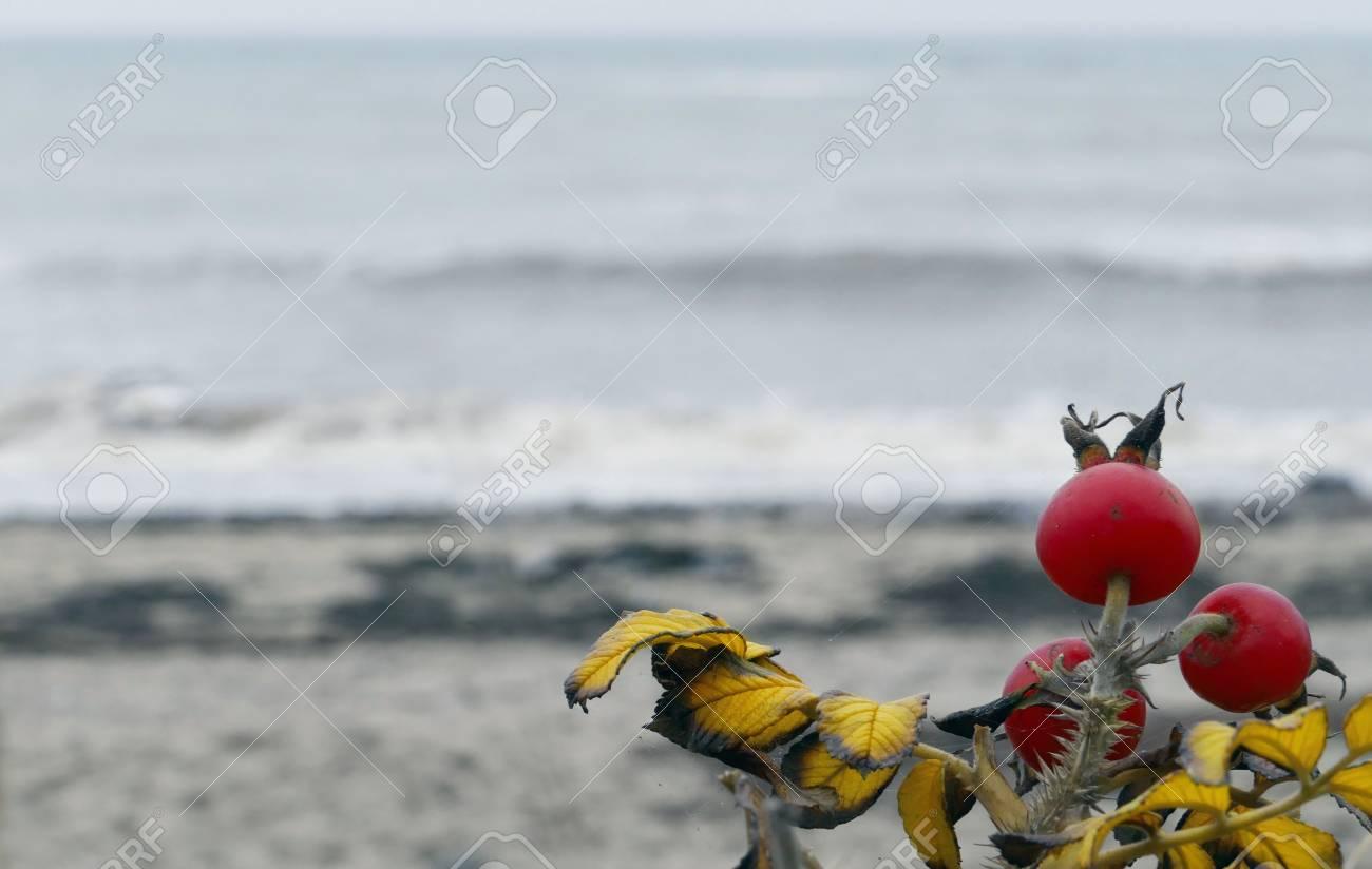 Encantador Hojas Para Colorear De Playa Molde - Dibujos Para ...