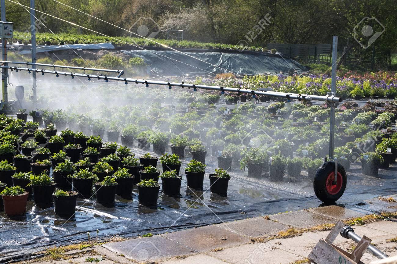 Arrosage Pour Plantes En Pot système d'irrigation utilisé pour arroser les plantes en pot à l'extérieur  d'un jardin maraîcher horticole