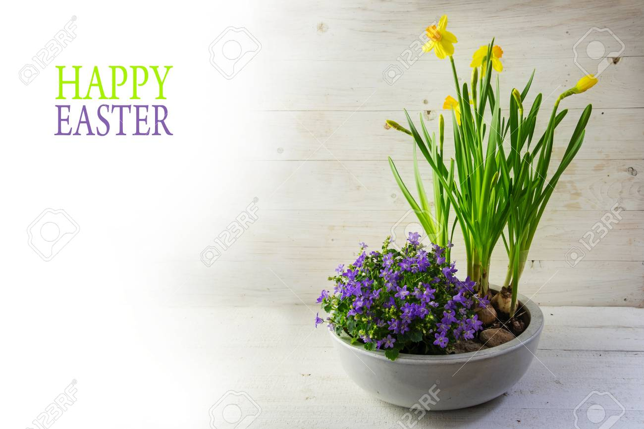 Potted spring flowers daffodils and bluebells in a ceramic bowl potted spring flowers daffodils and bluebells in a ceramic bowl on bright wood background mightylinksfo