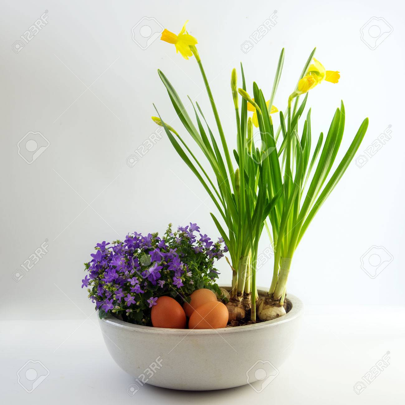 Potted spring flowers and eggs as easter decoration daffodils potted spring flowers and eggs as easter decoration daffodils and bluebells bright gray background mightylinksfo