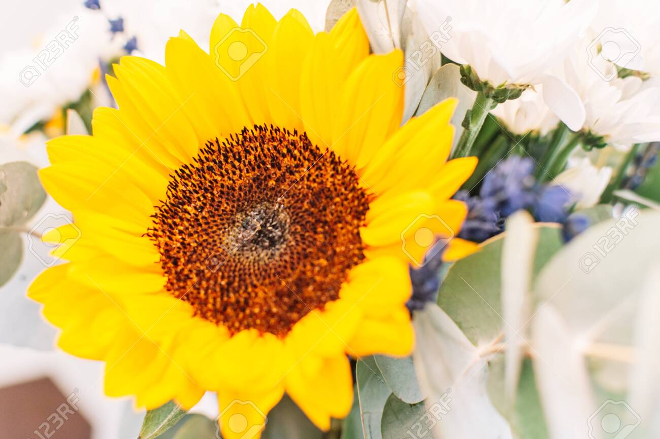 Bouquet with sunflower. Colorful bouquet with sunflowers, lavander and lilies. Close up - 131893986