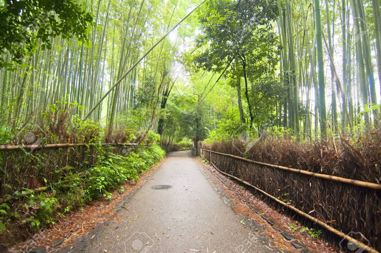 Way through a forest of bamboo Stock Photo - 13848629