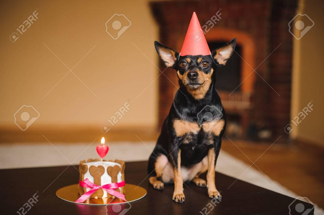 Stuk Speelgoed Terrier In Verjaardag Hoed Met Hond Taart Op Tafel