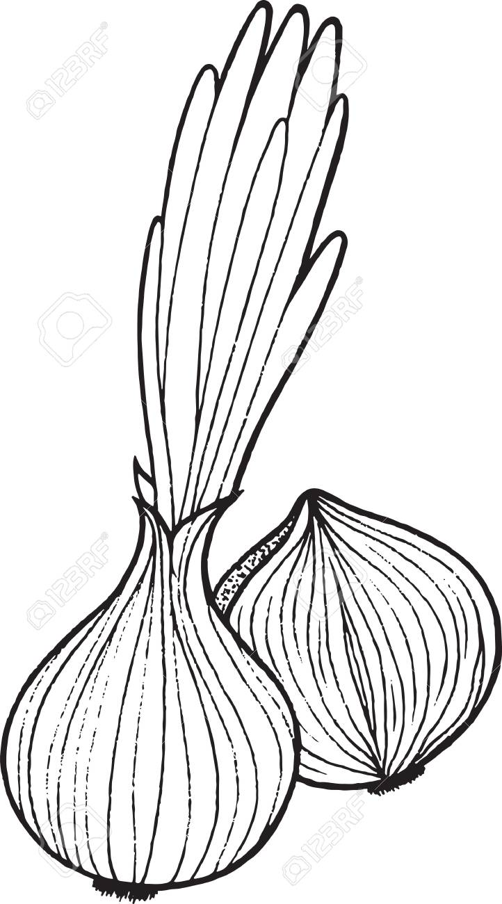 Onion Coloring Page Hand Drawn Illustration For Adult And Children ...