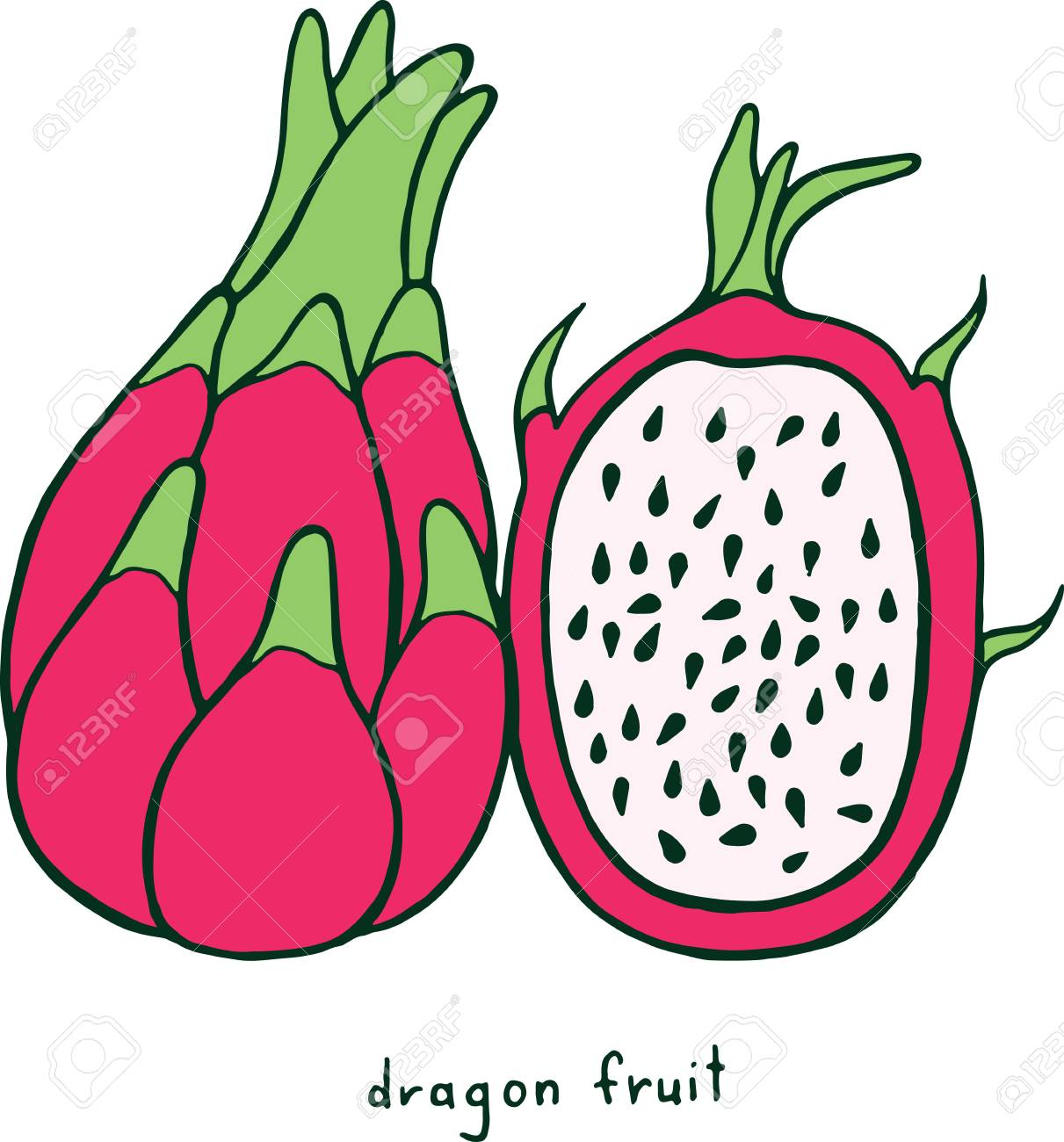 Dragon fruit coloring page graphic vector colorful doodle art for coloring books for adults