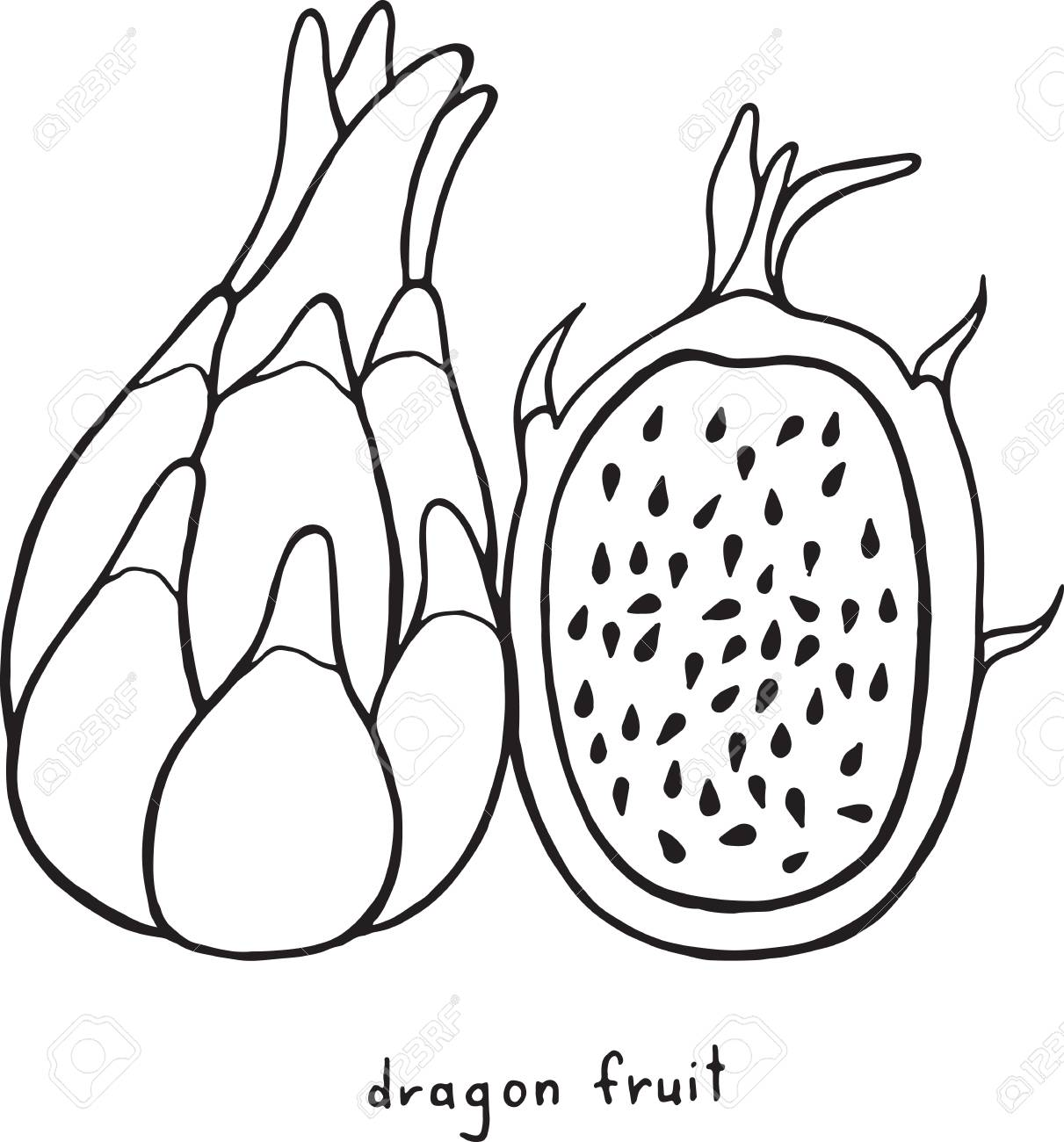 Dragon fruit coloring page. Graphic vector black and white art..