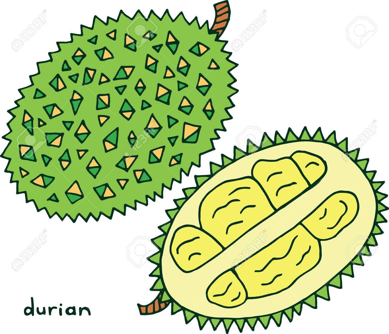 Durian Frucht Malvorlagen. Grafik Vektor Bunte Doodle Kunst Zum ...