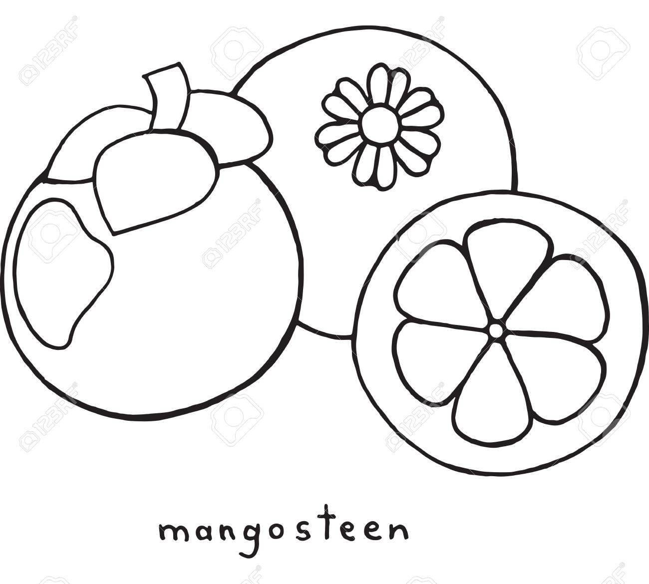 Página Para Colorear De Mangostán. Arte Gráfico Vector Blanco Y ...