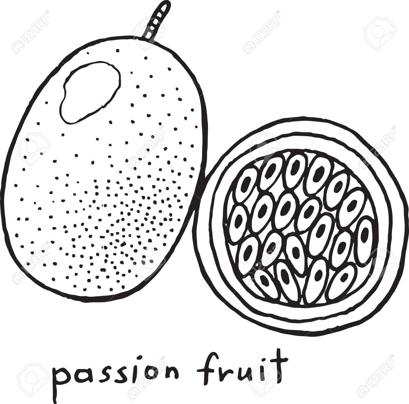 Passion fruit coloring page graphic vector black and white art for coloring books for adults